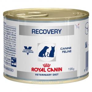 Консервы для собак и кошек, Royal Canin Recovery, в период анорексии, выздоровления, при липидозе печени кошек. Кормление через зонд